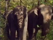 Selen In La Regina Degli Elefanti (a.k.a. …